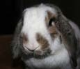 Profile picture of MunchMom