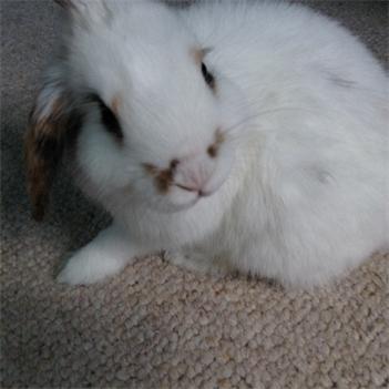 Profile picture of Bunnyluvva13