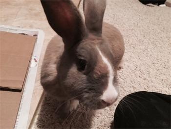 Profile picture of Hopper