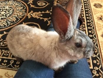 Profile picture of Annmaree