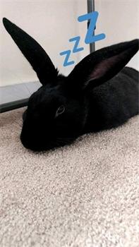 Profile picture of Rabbitreader321