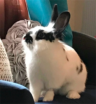 Profile picture of TheEstherBunny