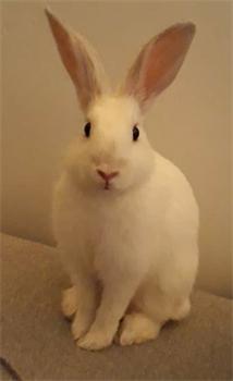 Profile picture of Alisha