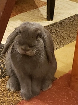 Profile picture of Kiki