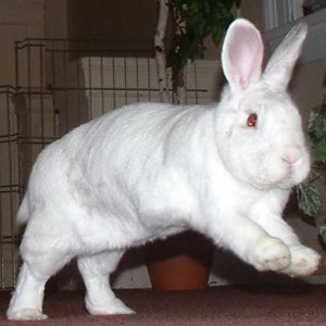 Profile picture of BinkyBunny