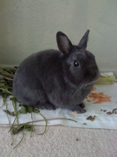 Profile picture of Sarita