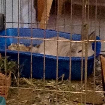 Profile picture of RabbitPam