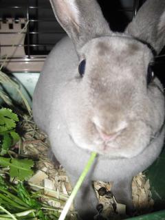 Profile picture of Lintini