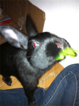Profile picture of Kai Loves Olive