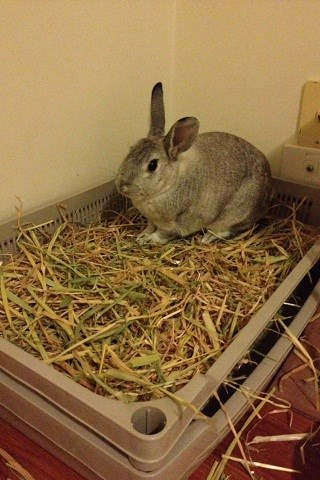 Image result for site:binkybunny.com Autumn's litter